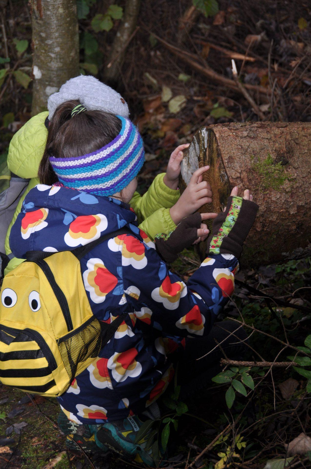 Lerngang in den Herbstwald